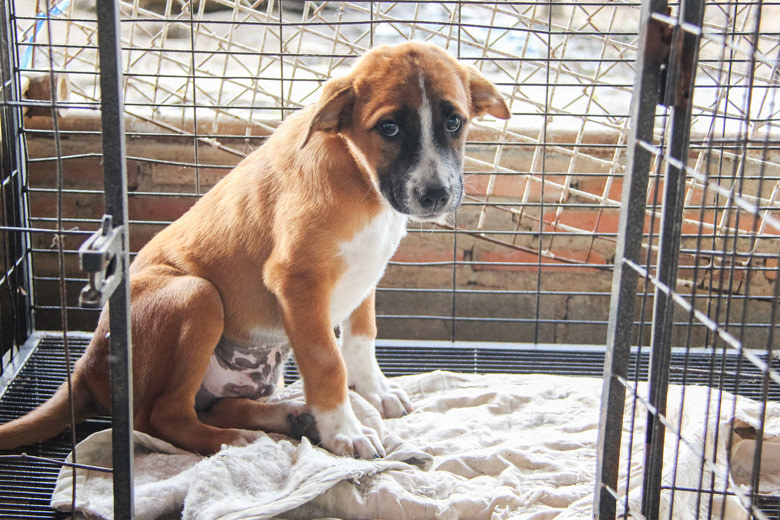 Tips For Bringing Home A Rescue Pup | MaxDaddy Products for Pets