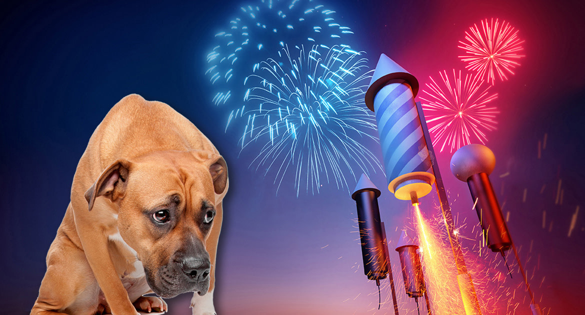 How To Keep Your Dog Clam During Fireworks | MaxDaddy